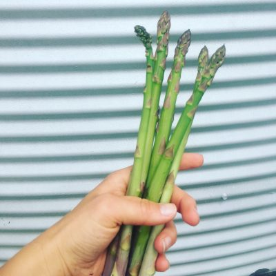 How to Grow and Forage Fresh Asparagus
